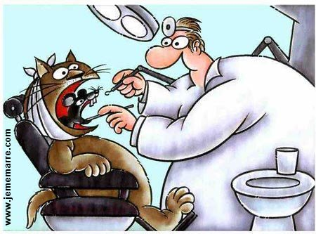 chat_et_souris_dentiste