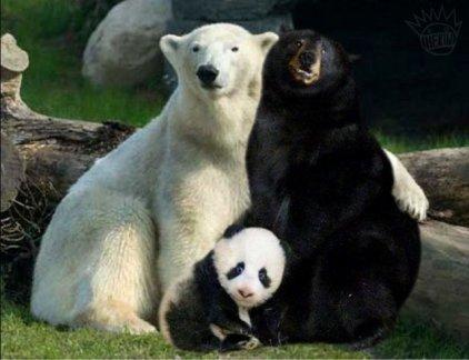 Comment naissent les pandas