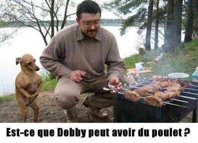 Dobby le chien