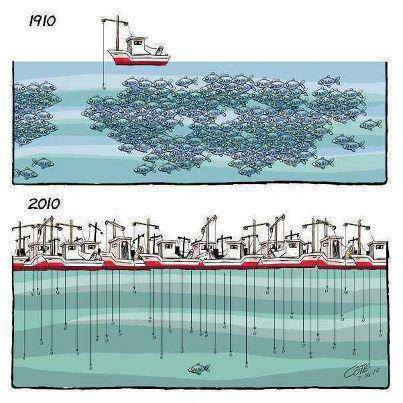 Pêche intensive