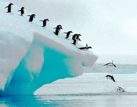 Adelie penguins group dive, Antarctic Peninsula