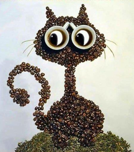 Le café du chat