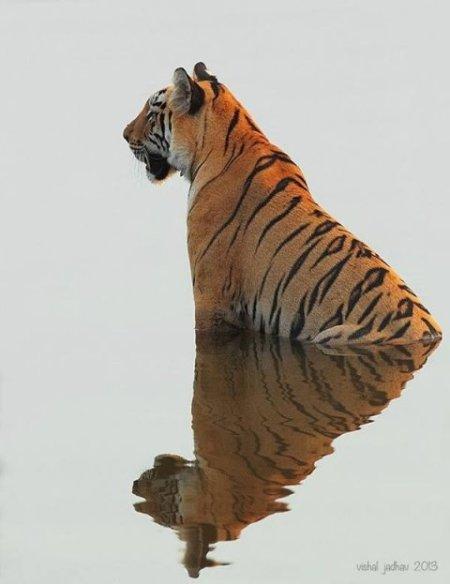 by Vishal Jadhav