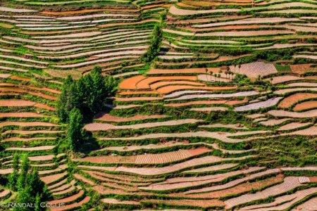 Yunnan by Randall Collis
