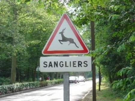 Sangliers mutants