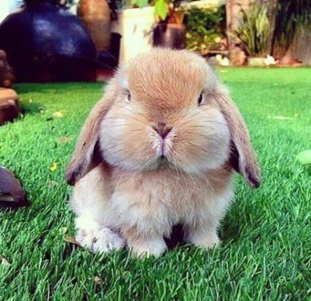 Mon gros lapin