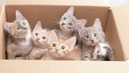 Portée de chats
