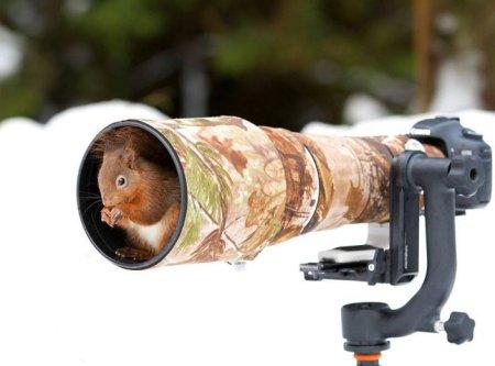Les animaux photographes 12
