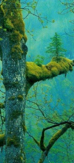 Bizarre Nature 21