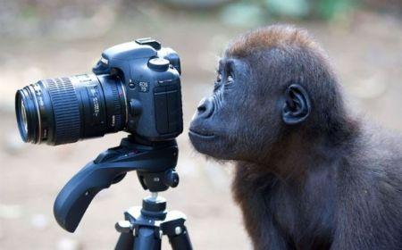 les-animaux-photographes-28