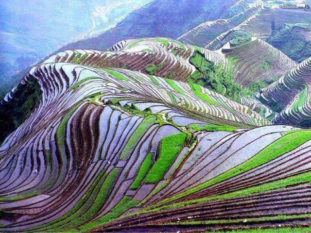 """Résultat de recherche d'images pour """"terrace rice fields in yunnan"""""""
