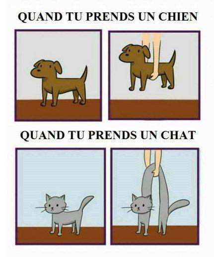 Humour : Chien Vs Chat… | Bouzou's Weblog